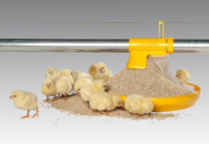 Produktbild Skålutfodring KIck-Off 330 med foder och kycklingar